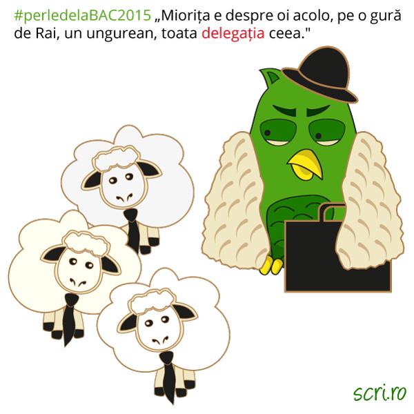 Delegatia-de-oi-Miorita