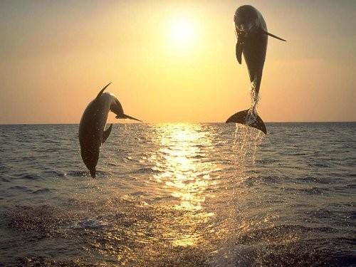 delfini1.jpg