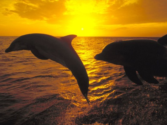 delfini2.jpg