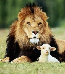 leul-si-oile.jpg